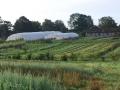 jardin-ferme-aux-cailloux2