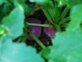 jardin-ferme-aux-cailloux8
